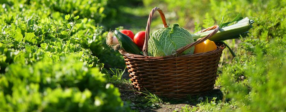 Nutrition Education Program