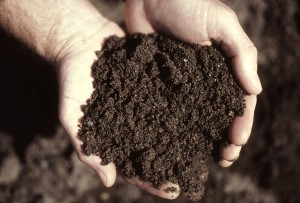 Soil (Photo by OSU's EESC)
