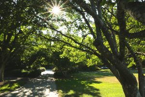 Campus sidewalk, leafy trees, green grass and bright sun