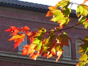 Orange and green maple leaves in front of Women's Building on OSU campus