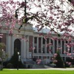 Cherry blossoms and OSU Memorial Union