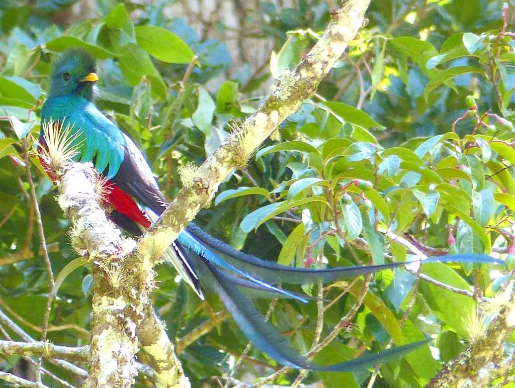 Quetzal_best_low