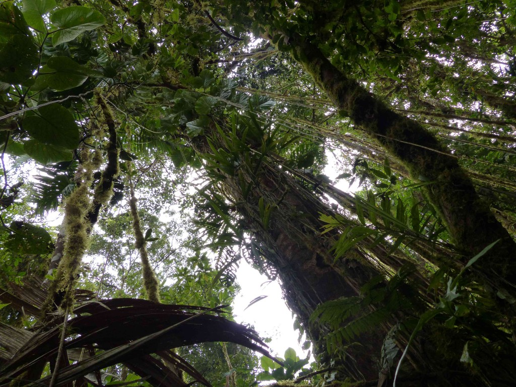 Jungle canopy_best_low