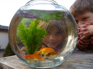 childlookingthroughfishbowl_siemens