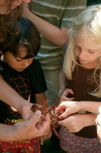 Kids learn about Oregon's native signal crayfish.