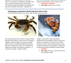 Pictures and copy from the species guide.