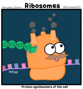 ribosome_gif_by_sarinasunbeam-d967sfa.png