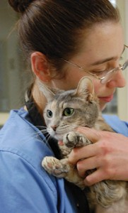 AMLCstudent-with-cat
