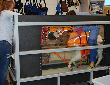 Animal Connection - Page 5 of 7 - OSU College of Veterinary