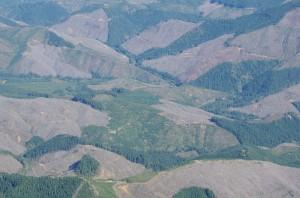 Plum creek landscape