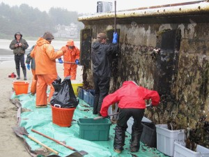 Cleaning the tsunami dock (Photo: OSU Hatfield Marine Science Center)