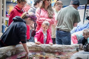 Touch tanks allow visitors of all ages to interact with sea urchins, anemones and other tide pool creatures