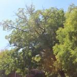 CPD Tree Repurposing