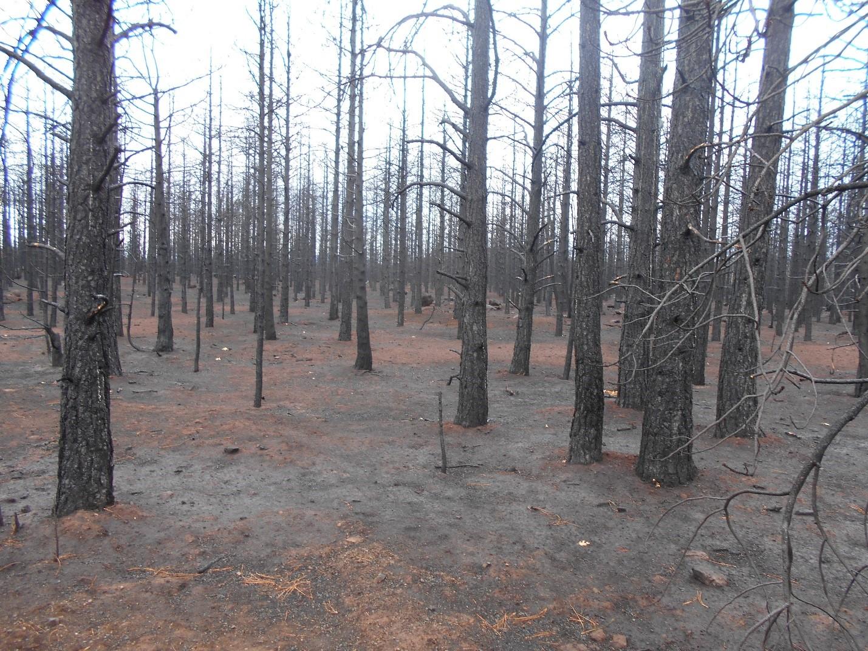 Oregon Gulch Fire, 2014
