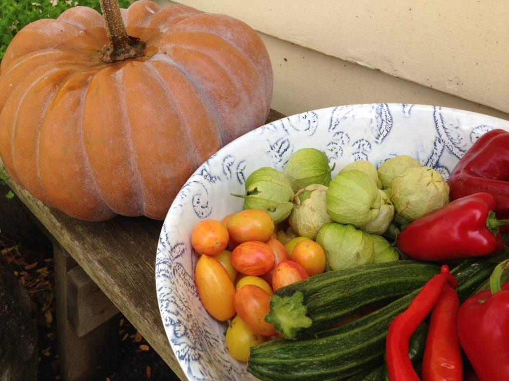 Pumpkin, tomatoes, zucchini, tomatillo, and pepper harvest