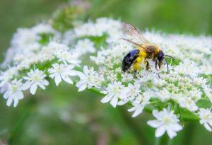 Pollinator on flower