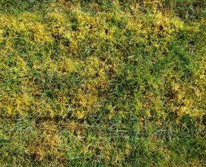 Moss in grass.