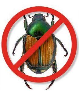 No Japanese Beetle logo
