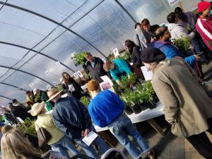 Customer surveying plants for sale on tables at GardenFest plant sale, in greenhouse.