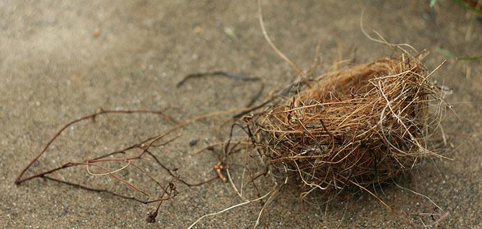 No more empty nest