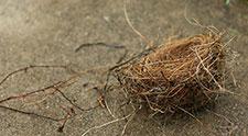"No more ""empty nest"""