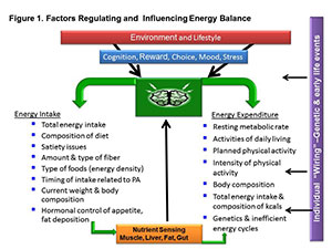 Engergy Balance Graphic
