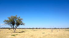 Public health in Botswana