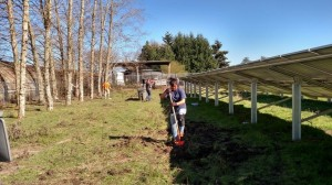 GEO 300 volunteer projects cleaning up unwanted plants from the solar arrays