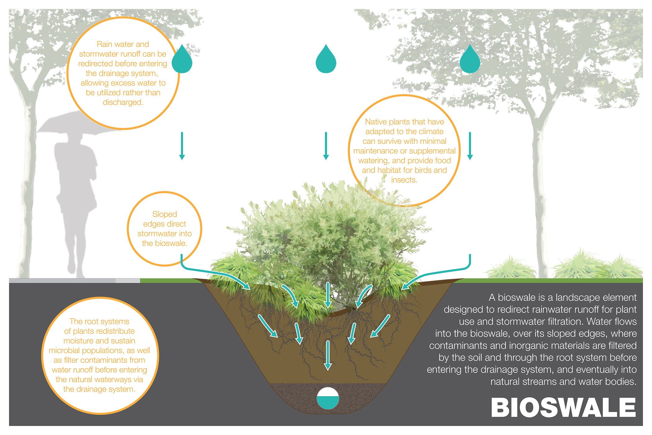 Digging Into Bioswales Ecologue