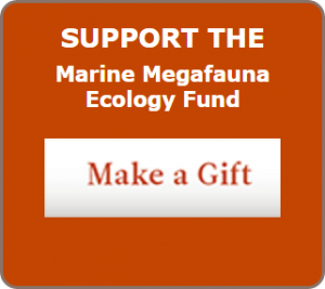 Marine Megafauna Ecology Fund