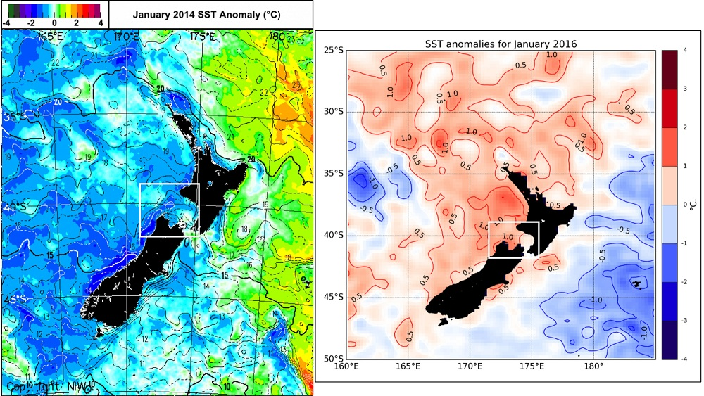 Figure 3. Comparison of sea surface temperature (SST) anomaly plots of the New Zealand region between January 2014 (left) and January 2016 (right). The white box in both plots denotes the general location of our blue whale study region. (Apologies for the different formats of these plots - the underlying data is directly comparable.)