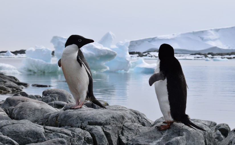 Wildlife of the Western Antarctic Peninsula