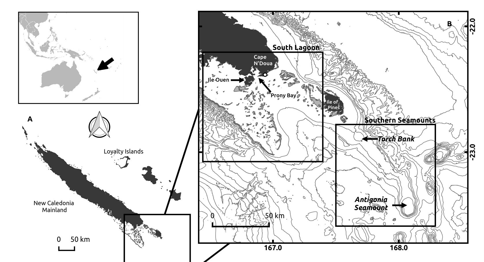 Map of New Caledonia and our study areas: the South Lagoon and the Southern Seamounts. Light grey lines represent 200m isobaths. Land is shown in black and reefs in grey.