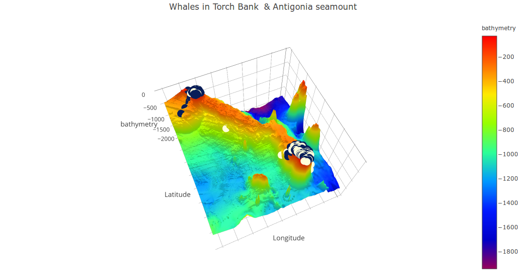 "Figure 3: 3D surface plot of the seabed in the Southern seamount area. Humpback whale groups observed in-situ during the boat-based surveys conducted between 2001 and 2011 are projected at the surface of the seabed: blue points represent groups without calf and white points represent groups with calf. Antigonia and Torch Bank have a clear flat-top shaped which classifies them in the ""guyot"" seamount type. Most whale groups aggregated on top of these guyots."