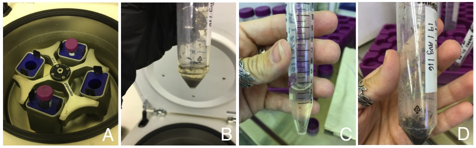 Figure 2: Analytical processes: (A) Samples centrifugation; (B) Result from the centrifugation; (C, D) Results from separating water and sample.