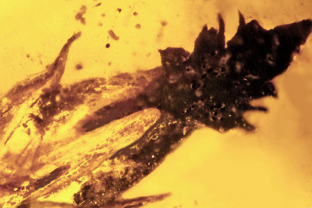 Amber fossil links early grass, dinosaurs and fungus to LSD
