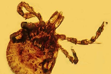 Lyme disease older than human race