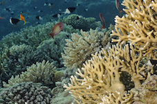 Marine reserves can mitigate effects of climate change