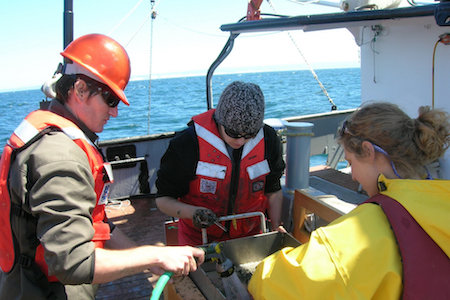 Surveying seafloor animals for offshore renewable energy