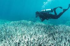 Biologists find that climate change threatens coral symbiosis