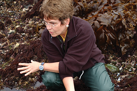 Marine ecologist receives prestigious National Science Board award