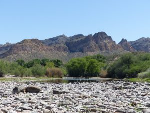 One of Emily's current study sites: the lower Salt river outside of Phoenix, AZ