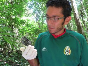 Felipe after sampling a baby trogon (Trogon melanocephalus). This species only nest inside termite nests.