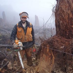 Thomas Stokely cutting fence rows through logging slash and large stumps to construct wildlife exclosures