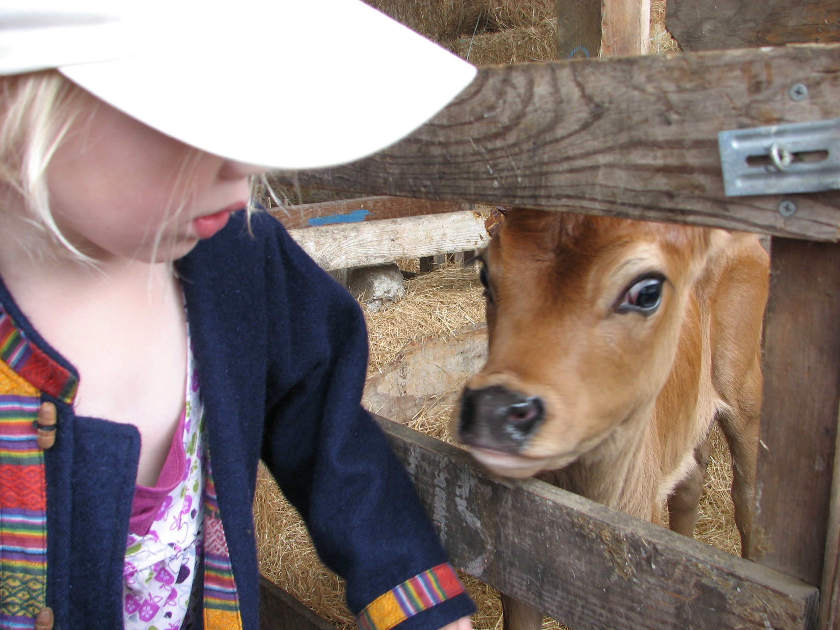 meet the cows who make the cream organic valley farm visit