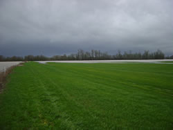 View of partially flooded farm fields in the Calapooia Basin