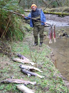 Katherine sorting coho salmon PIT tagged carcasses after spawning