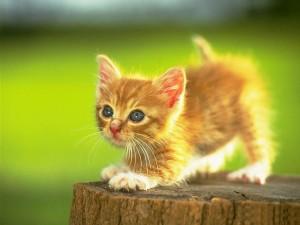 Adorable-lil-Kittens-cute-kittens-9781745-1024-768