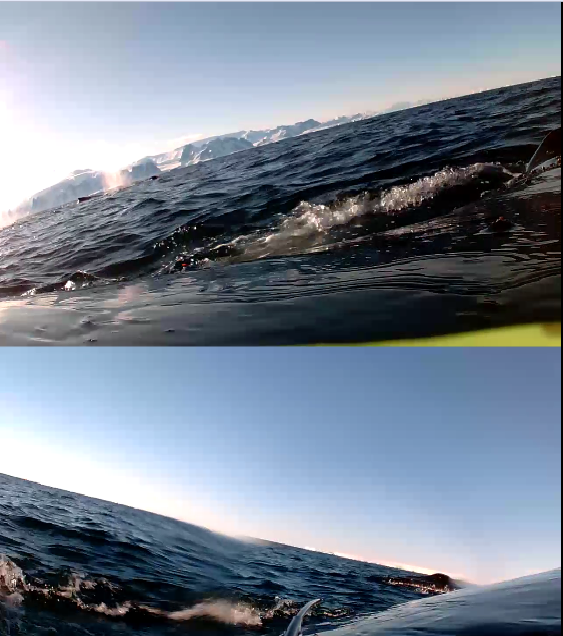 If you look closely you'll see two whales in the top frame (left side of the whale) and one whale in the bottom frame (right side of the whale)