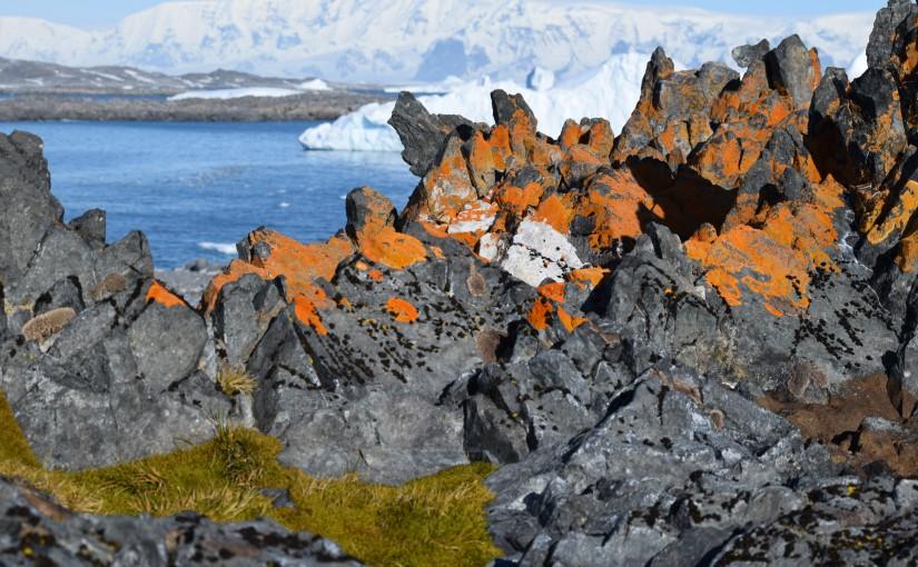 Lichen what we're seeing